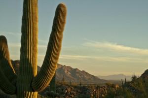 Desert Image 2
